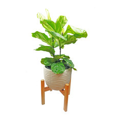 Indoor Pots and Planters For Less | Houzz