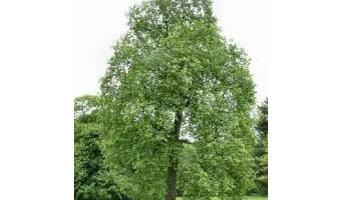 Tree Service Tomball TX
