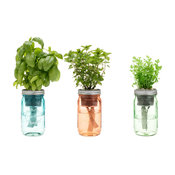 Thai Spice Herb Garden Jar, Set of 3