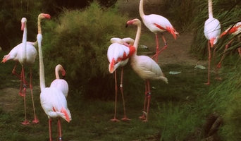 Pretty In Pink Flamingos
