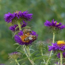 Garten für Insekten