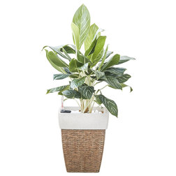 Tropical Outdoor Pots And Planters by Vifah