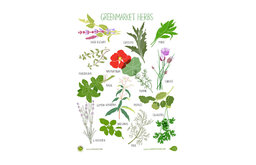 Herb Poster Hurricane Irene Fundraiser By Claudia Pearson