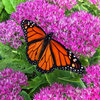 6 Steps to Creating Your Butterfly Garden