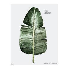 """Botanic Urban Plate 4, Musa"" Print, Large, 50 x 70 cm"