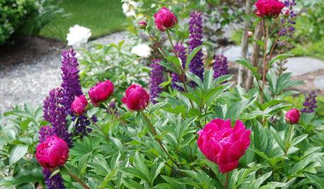 Delight in Summer's Garden Glories — Here's What to Do in June