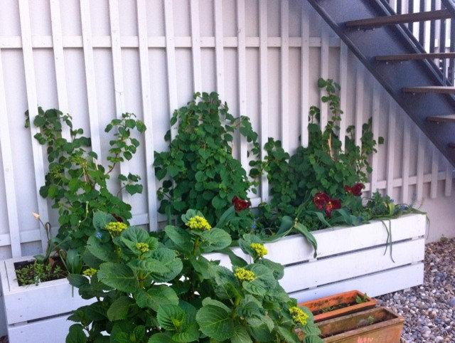 Garten by Nelka - Bepflanzung Dachterrasse Balkon Innenhof