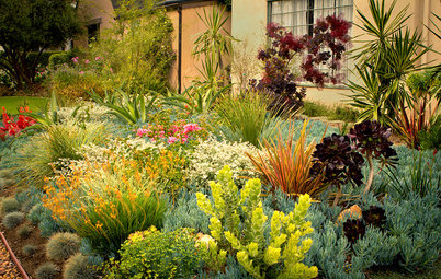 8 Colorful Drought-Tolerant Landscape Designs