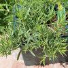 Les mille et une vertus des plantes aromatiques