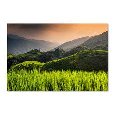 "Philippe Hugonnard 'Sunset Rice V' Canvas Art, 47""x30"""