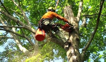 Manik tree services comapany