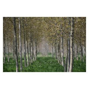"""Northern Italian Fields"" Photo Print, Canvas Print, 60x40 cm"