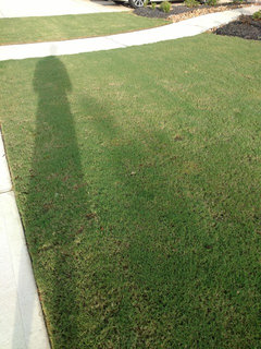 Why is my bermuda not growing horizontally and green yet?