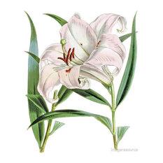 """Tiger Lily"" Botanical Print, 60x74 cm"