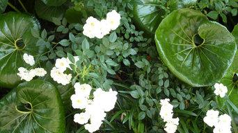 White garden portfolio