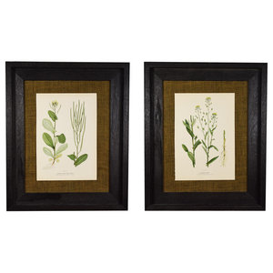 Original Vintage 1910 Botanical In Rustic Frame, Set of 2