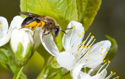 Invite Mining Bees to Your Garden by Planting Their Favorite Plants