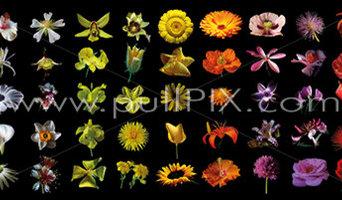 Blütenmotiv von Ingo Botho Reize auf den PASAGEN Köln
