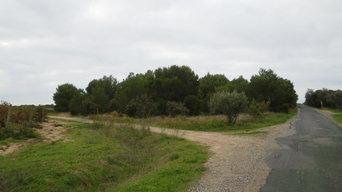 Mise en valeur d'un domaine viticole - Zone 1 : Restauration d'une pinède