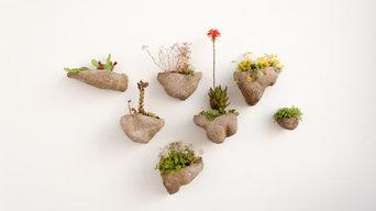 Wedding Plant