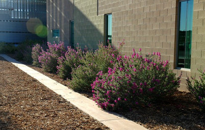 How to Avoid Overcrowded, Overpruned Shrubs