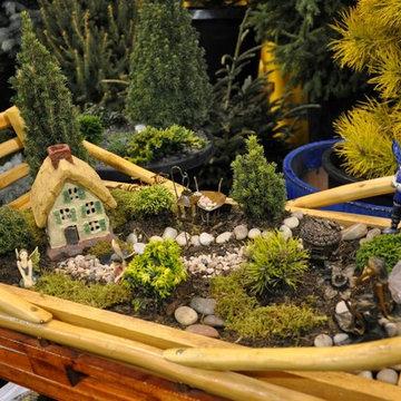Dwarf Conifer and Fairy Gardens