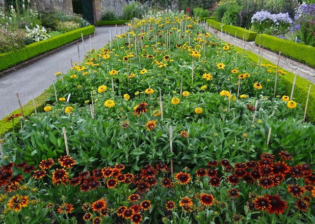 How To Grow Your Own Cut Flower Garden