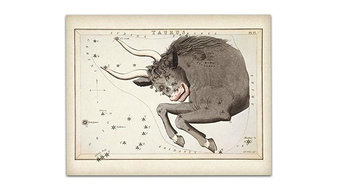 Antique Zodiac Taurus Constellation Plate, 11x14 Unframed Art Print