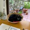 いつもそばに猫がいた。猫と私の平和な時間と幸せな日々