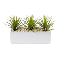 Mini Agave in Rectangular Ceramic Planter