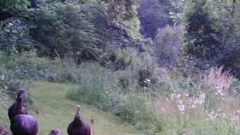 Meadow Restoration - Frederick County, MD