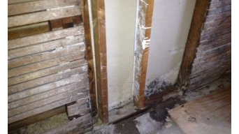 Recent Mold Inspection in Chicago