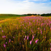 Help Fuel the Monarch Migration With These 6 Prairie Plants