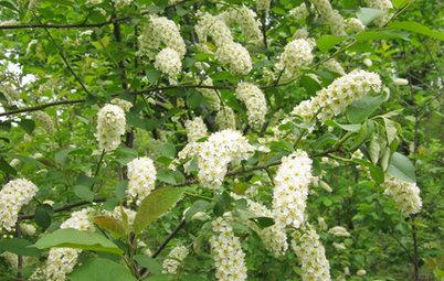 Native Plant Alternatives to Invasive Common Buckthorn