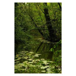 """""""Green"""" Photo Print, Canvas, 40x60 cm"""