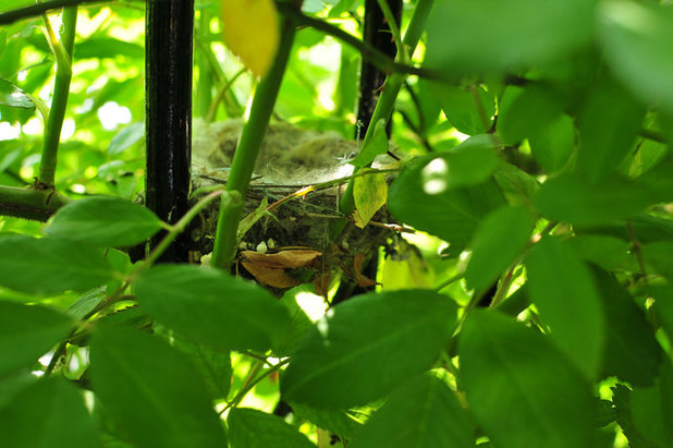 The baby Goldfinches have fledged