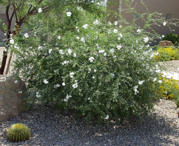 10 Drought-Tolerant Shrubs That Thrive in Full Sun and