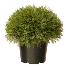 """15"""" Juniper Bush With Green Pot"""