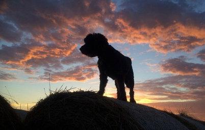 43 Pets Having a Pretty Awesome Summer Break So Far