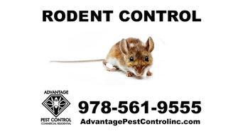 Mice Removal in Topsfield, MA