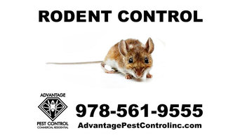 Mice Removal in Topsfield, MA