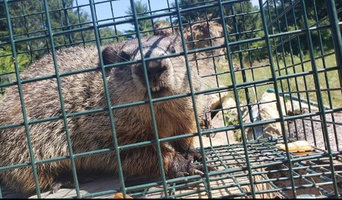 Rodent Exclusion in Carver, MA