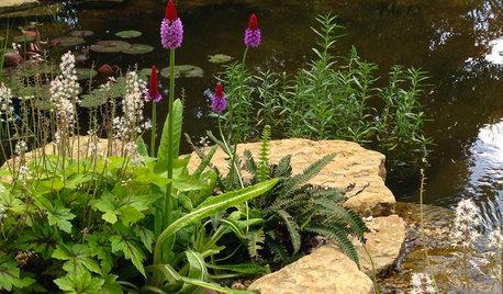 Drømmer du om en lille sø i haven? Her er 20 skønne havebassiner