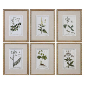 Uttermost, Set of 6 Green Floral Botanical Study Prints