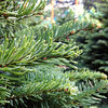 5 Easy Tips to Care for Your Live Christmas Tree