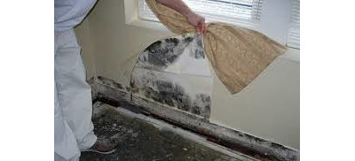 by Mold Inspection & Testing Chicago IL