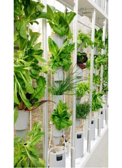 Contemporary Indoor Pots And Planters by store.windowfarms.com