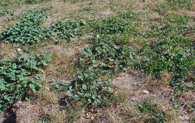 Weed War: When and How to Use Chemical Herbicides