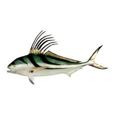 "55"" Roosterfish Half Mount Fish Replica"