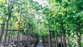 Vivai Paola Favilla, le nostre piante, la nostra competenza,e ispirazione